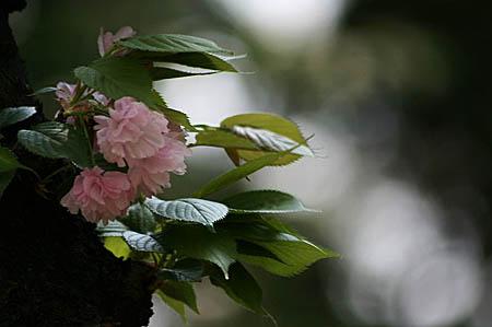 新宿御苑にて_f0030085_11404919.jpg