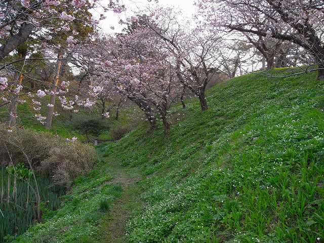 4月23日、松前城の桜_f0138096_1152505.jpg