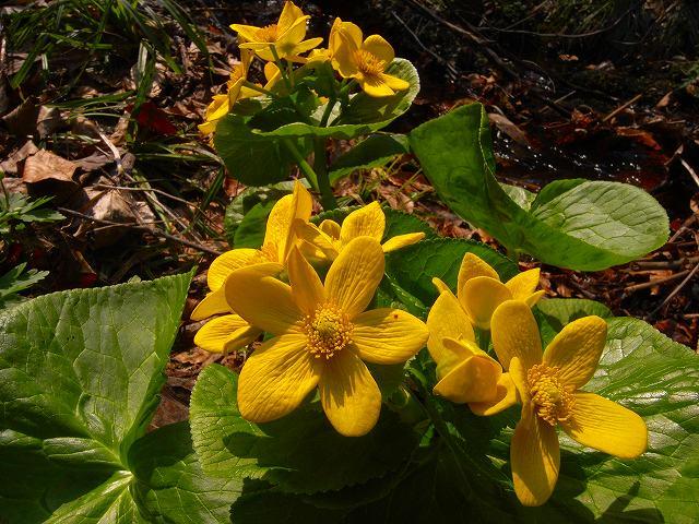 4月23日、笹山で見た花の写真をメインに_f0138096_1324108.jpg