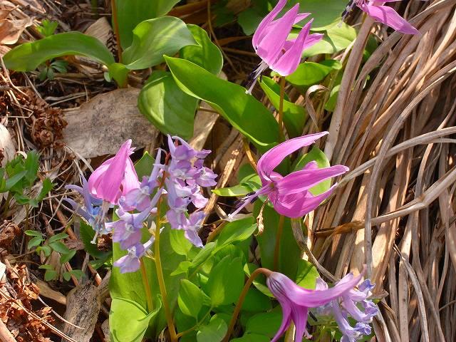 4月23日、笹山で見た花の写真をメインに_f0138096_13271128.jpg