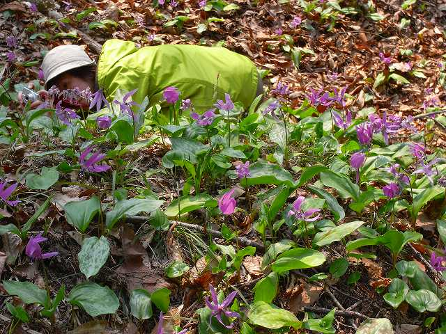 4月23日、笹山で見た花の写真をメインに_f0138096_13281584.jpg