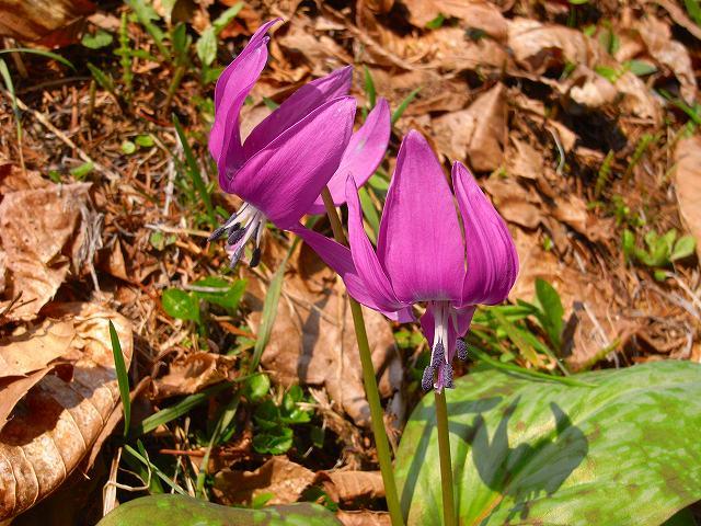 4月23日、笹山で見た花の写真をメインに-その2-_f0138096_1731080.jpg