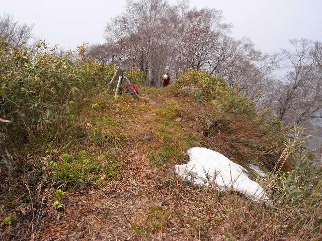 4月23日、笹山で見た花の写真をメインに-その2-_f0138096_1741486.jpg