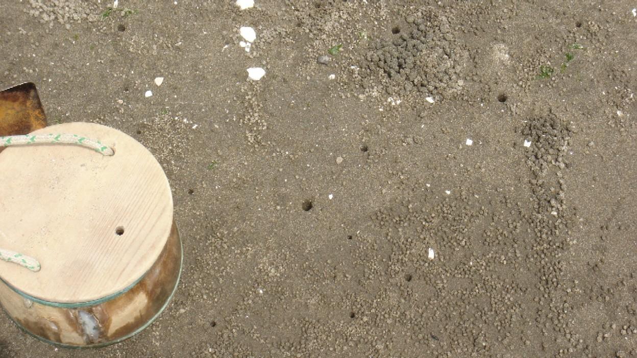 ★天気よし!蟹・貝獲り!★_e0147297_021381.jpg
