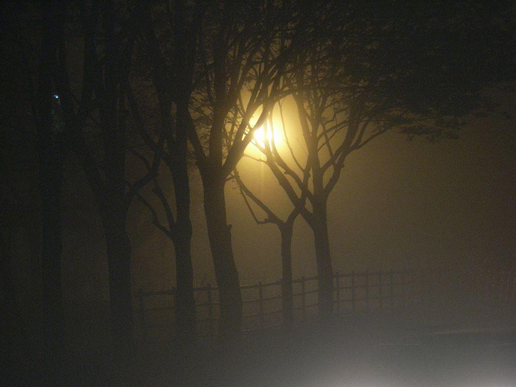 霧にむせぶ夜_c0025115_1956425.jpg