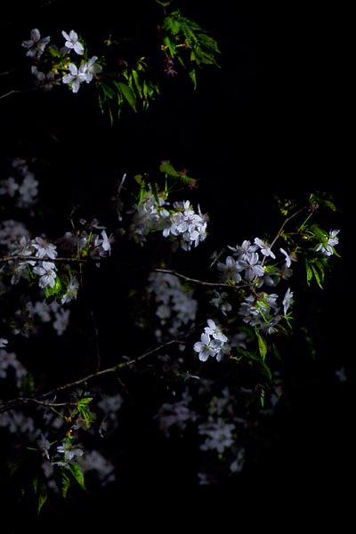 浸緑 -SHINRYOKU-_e0117517_1341885.jpg