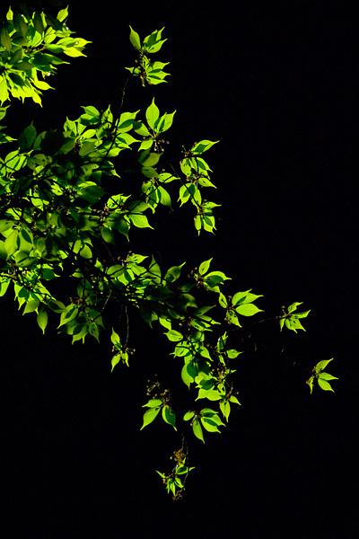浸緑 -SHINRYOKU-_e0117517_1342863.jpg