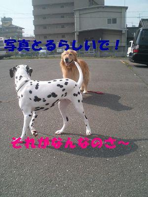 b0127531_21185038.jpg