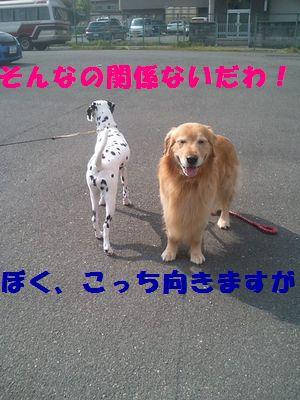 b0127531_21201932.jpg