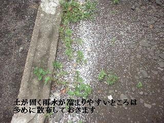 f0031037_17595291.jpg