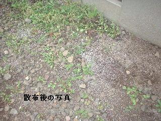 f0031037_1805755.jpg
