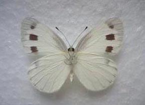 f0161552_1815818.jpg