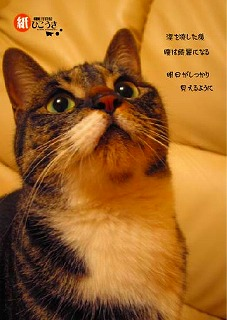 答えのない悩み_b0129362_1252883.jpg