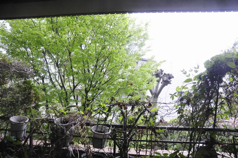緑がすっかり茂って色も濃くなった_a0031363_713516.jpg