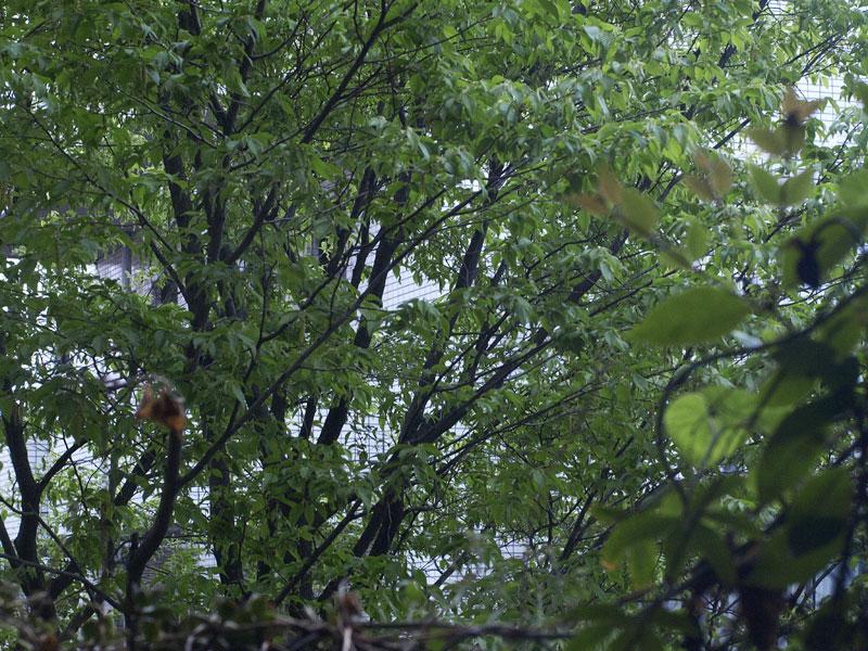 緑がすっかり茂って色も濃くなった_a0031363_71441.jpg