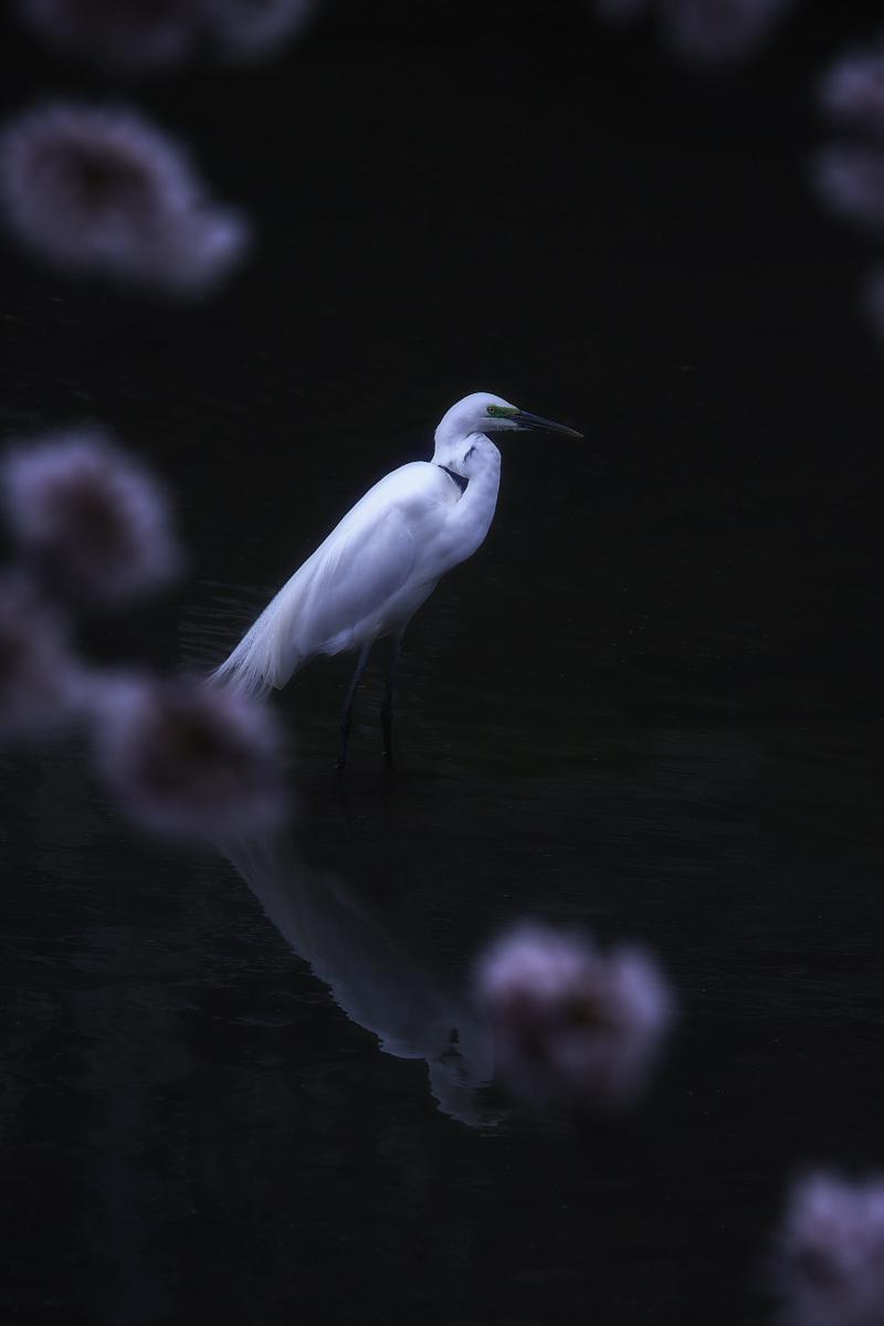 桜 2008 番外編 2_f0021869_19474534.jpg