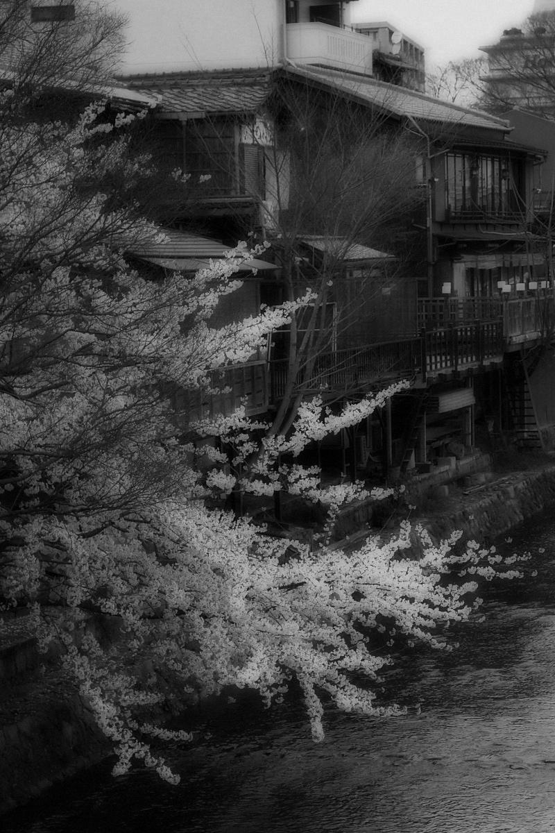 桜 2008 番外編 2_f0021869_19532558.jpg