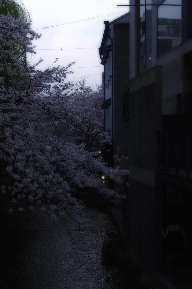 桜 2008 番外編 2_f0021869_19554256.jpg