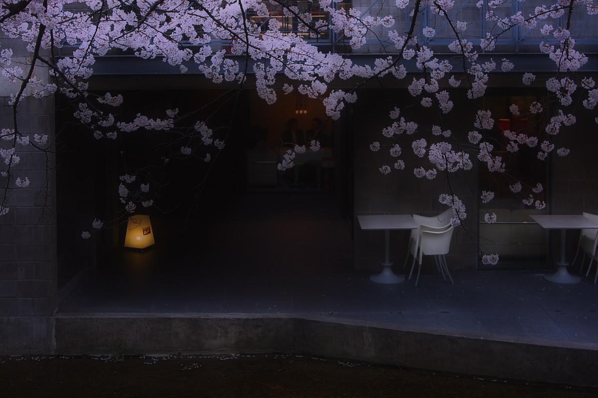 桜 2008 番外編 2_f0021869_1958115.jpg