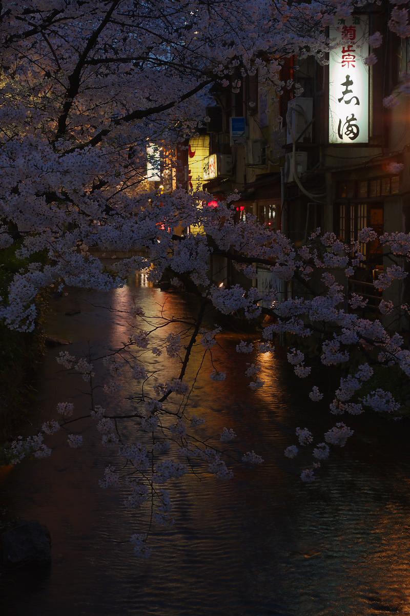 桜 2008 番外編 2_f0021869_2001447.jpg