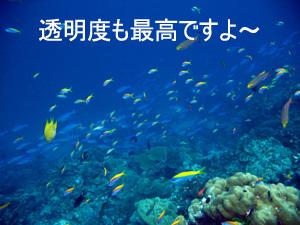 f0144385_3424555.jpg