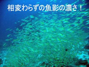 f0144385_343172.jpg