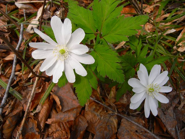 4月23日、笹山で見た花の写真をメインに-最終回-_f0138096_10333997.jpg