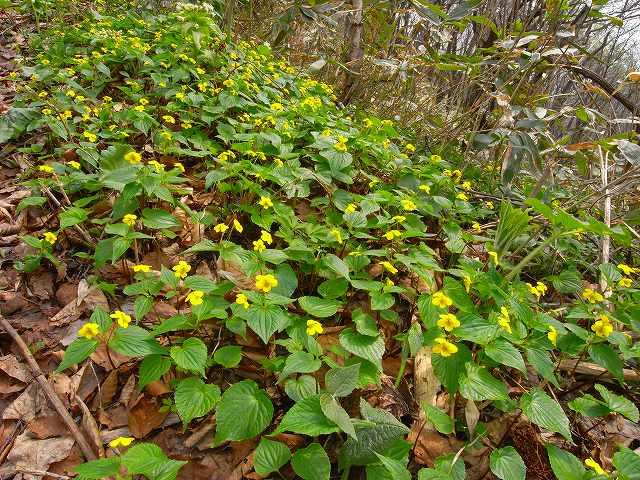 4月23日、笹山で見た花の写真をメインに-最終回-_f0138096_10335048.jpg