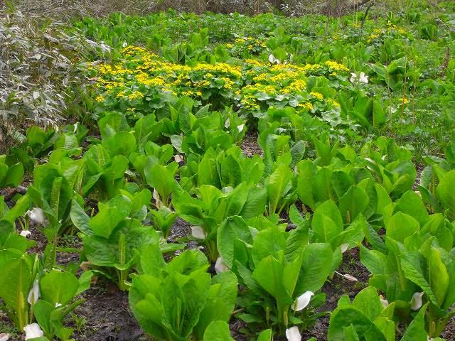 4月23日、笹山で見た花の写真をメインに-最終回-_f0138096_10341241.jpg