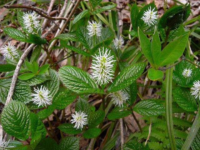 4月23日、笹山で見た花の写真をメインに-最終回-_f0138096_10455784.jpg