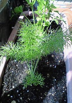 筍の木の芽焼き♪_f0116812_1028221.jpg