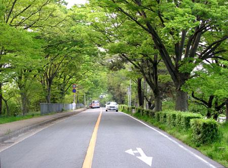 加茂街道 新緑_e0048413_2017545.jpg