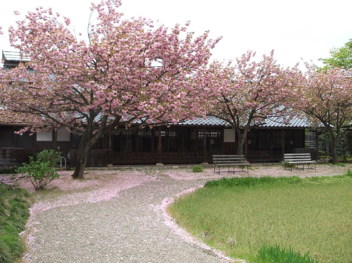 桜から藤へバトンタッチ☆_e0135219_17124522.jpg