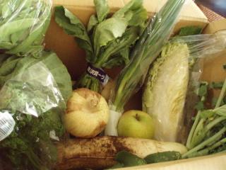 +野菜ソムリエと大地のコラボ+_e0140921_1638318.jpg