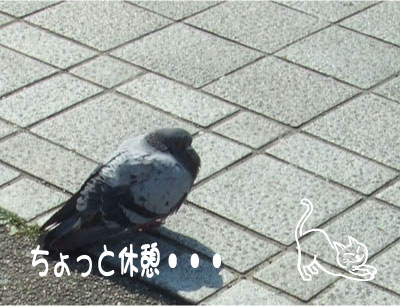 b0138922_18591518.jpg