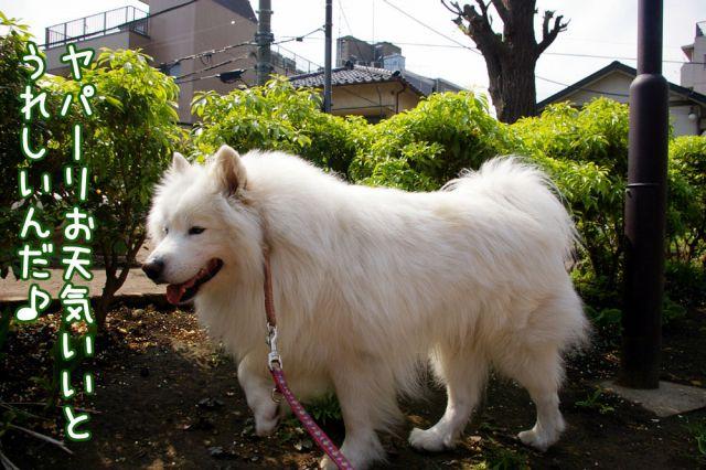 ピッカリお散歩_c0062832_17141690.jpg