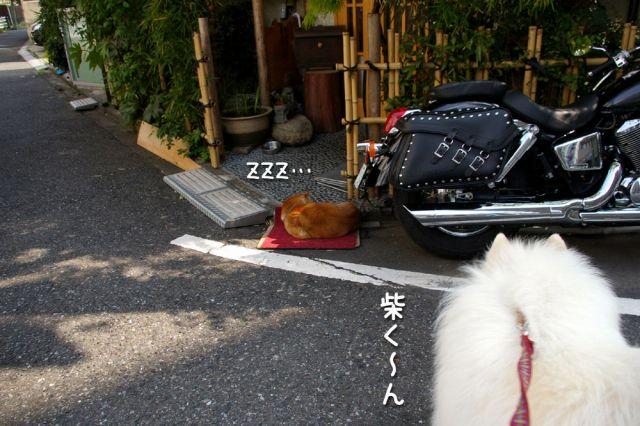 ピッカリお散歩_c0062832_17143050.jpg