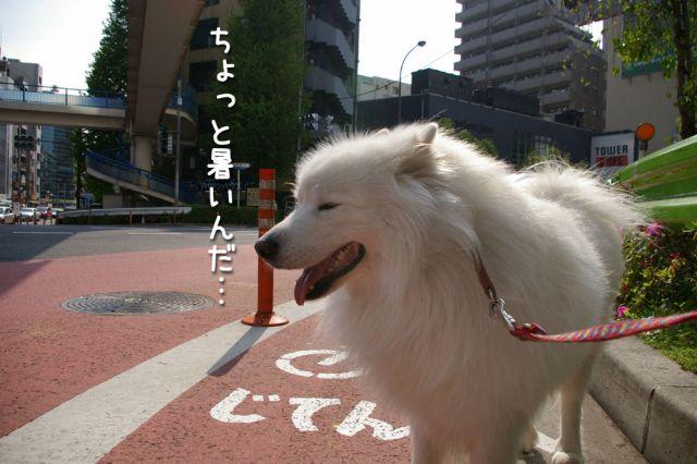 ピッカリお散歩_c0062832_17143816.jpg