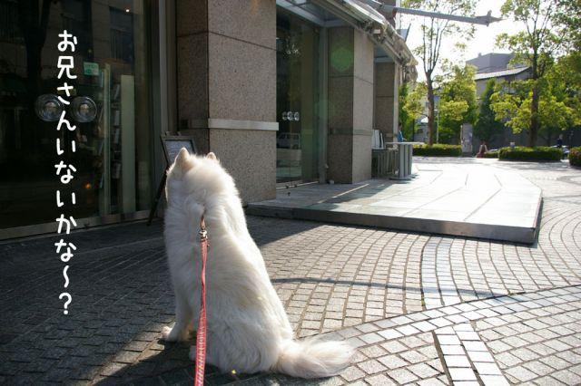 ピッカリお散歩_c0062832_17144884.jpg