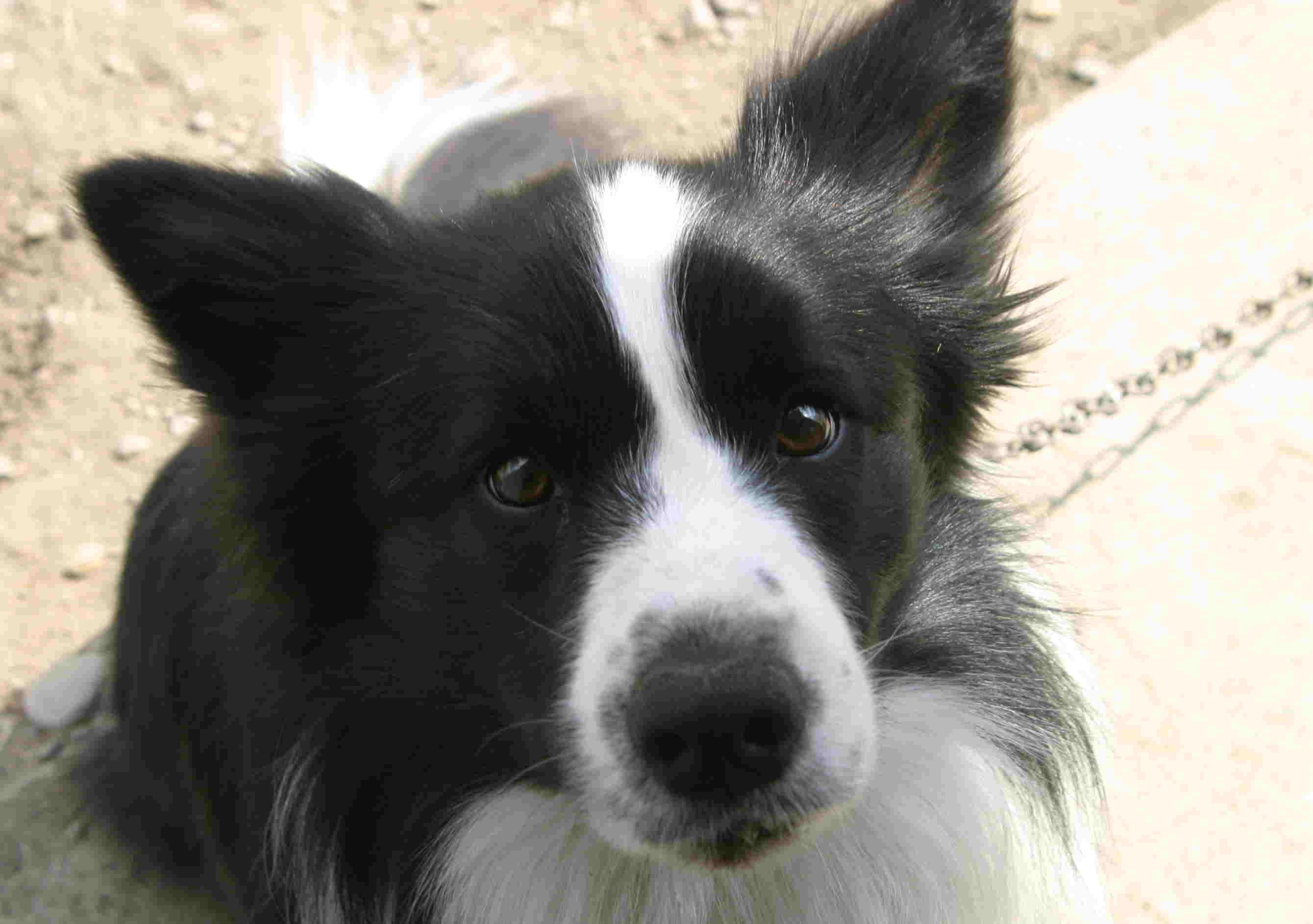 4月3日 牧豚犬「ポルコ」誕生か?_a0103738_18204780.jpg