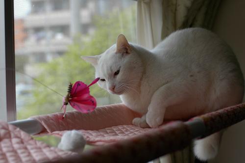 しろ娘・瞳子さんのおもちゃ遊び_d0084952_018171.jpg
