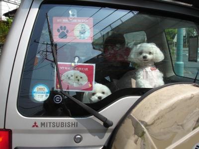 朝からカリちゃん、エンジェル可愛い〜って!!_b0001465_14544076.jpg