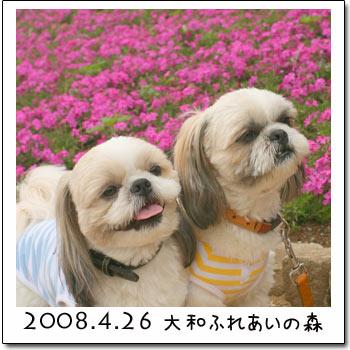 b0024183_16474356.jpg