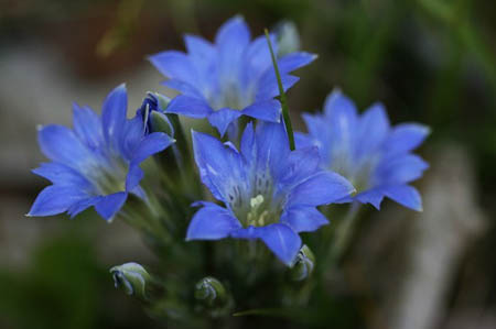 森林公園花だより_f0030085_15115788.jpg
