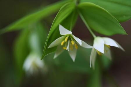 森林公園花だより_f0030085_15124278.jpg