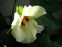 森林公園花だより_f0030085_1532116.jpg