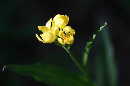 森林公園花だより_f0030085_1585776.jpg