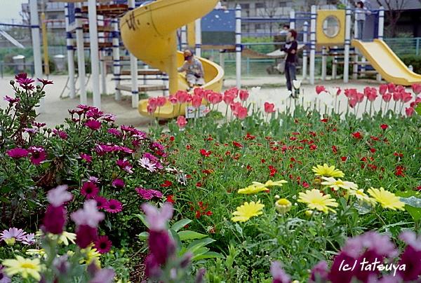 Apr.  26  (sat)    公園_f0139991_21225311.jpg