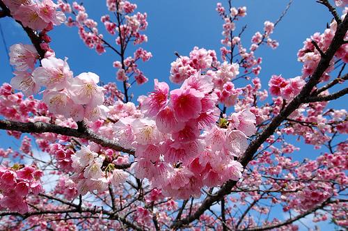 花より団子的な感覚。_e0062921_13164230.jpg