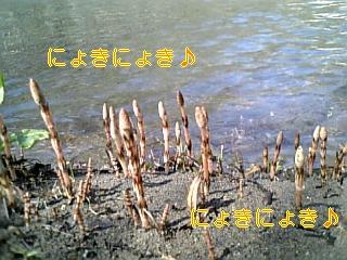 f0148927_18442240.jpg